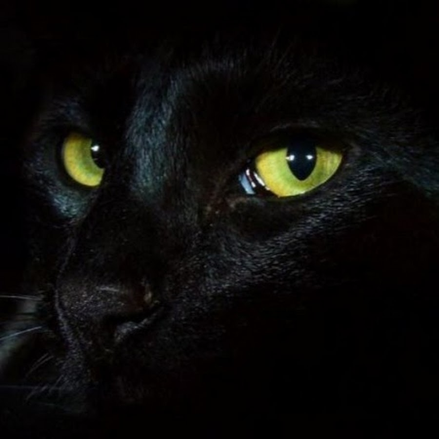 фото картинки глаз пантеры комедии грибоедова
