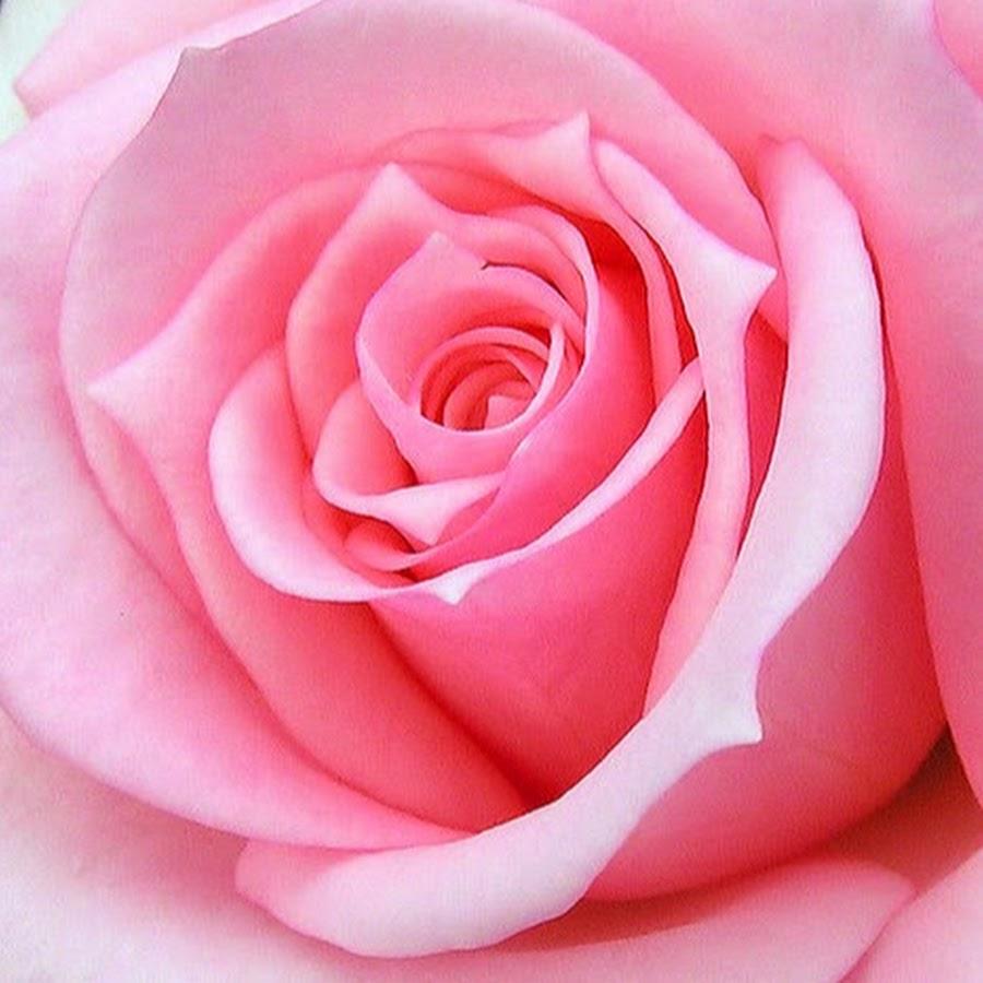 картинки на аву цветы большой размер чтили