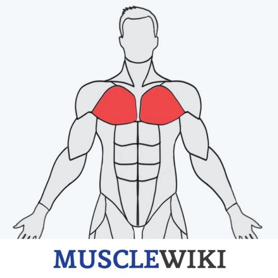 MuscleWiki - YouTube