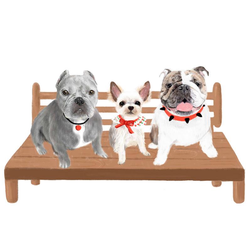 링마TV, 3마리 강아지와 함께하는 일상