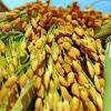 nông nghiệp nông thôn