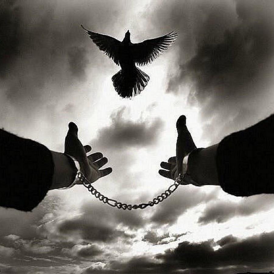 Картинки со смыслом свободы