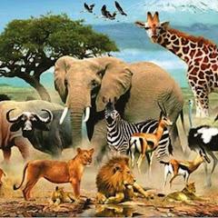حيوانات animall