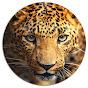 Leopard - Cheetah Channel