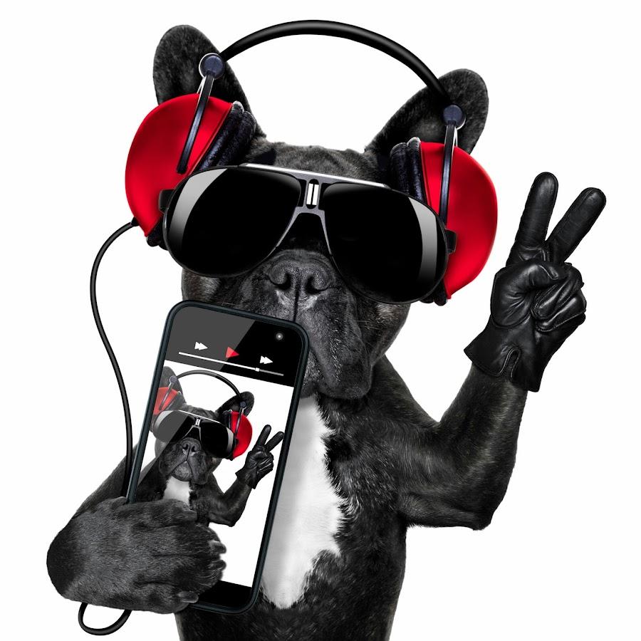 картинка собака с микрофоном что скоро