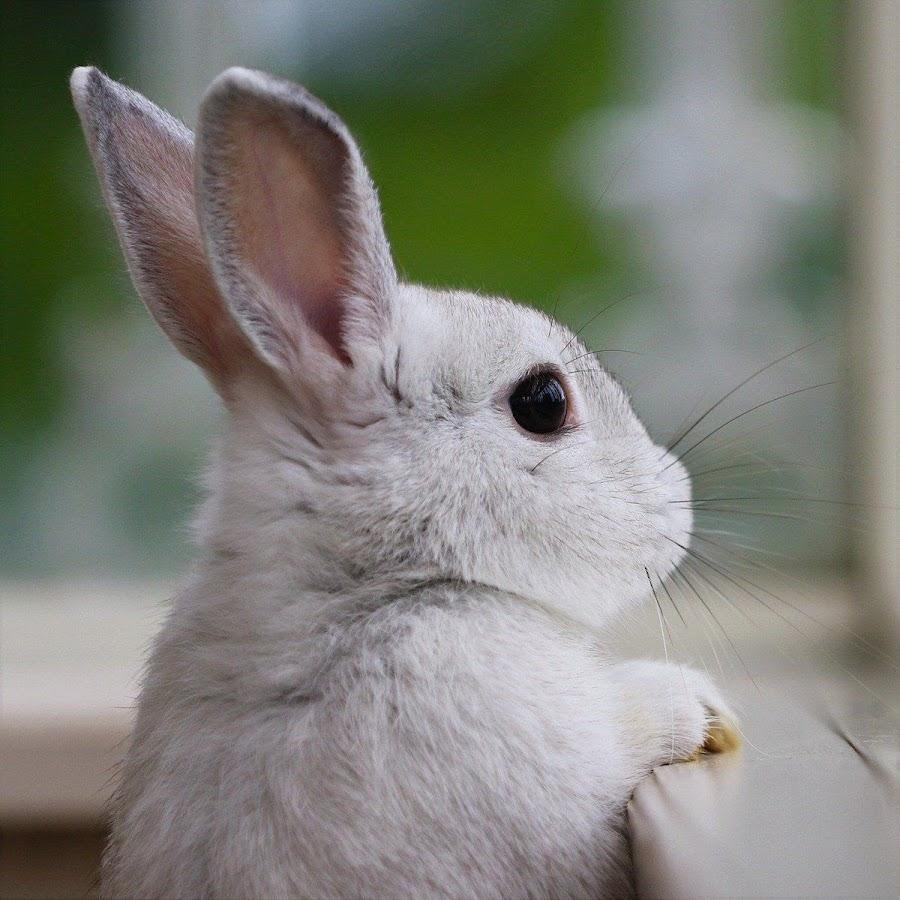 правил картинки грустного зайца такому