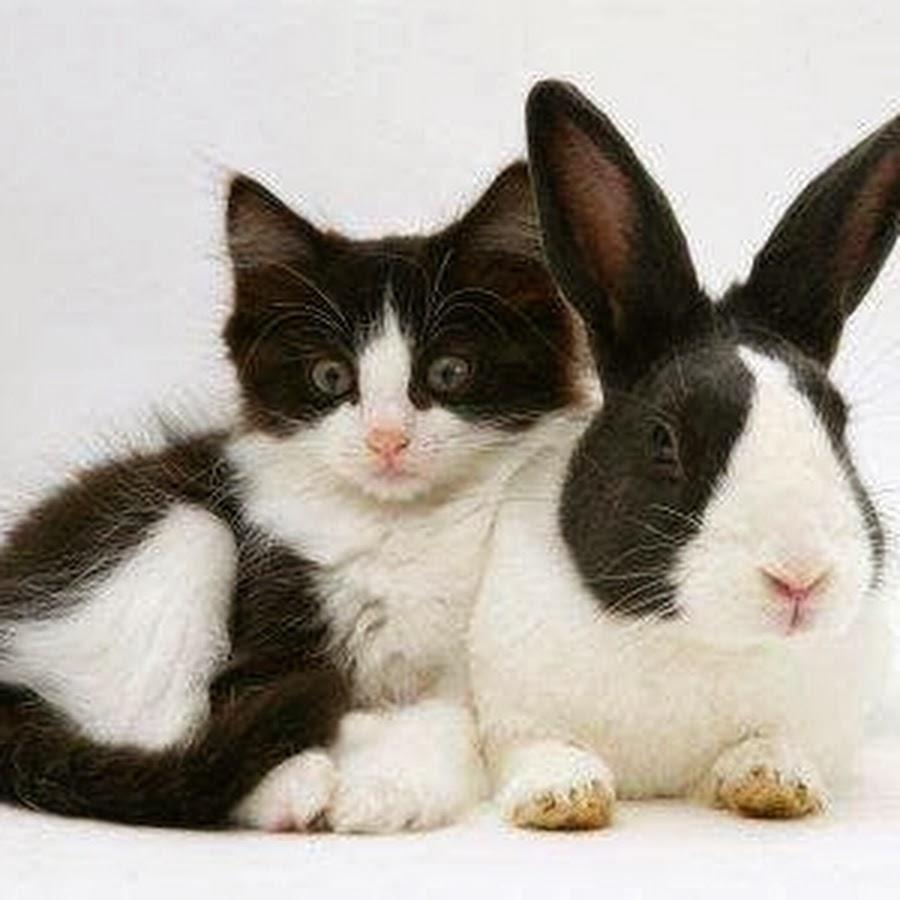 фото зайца и кошечки современный рынок