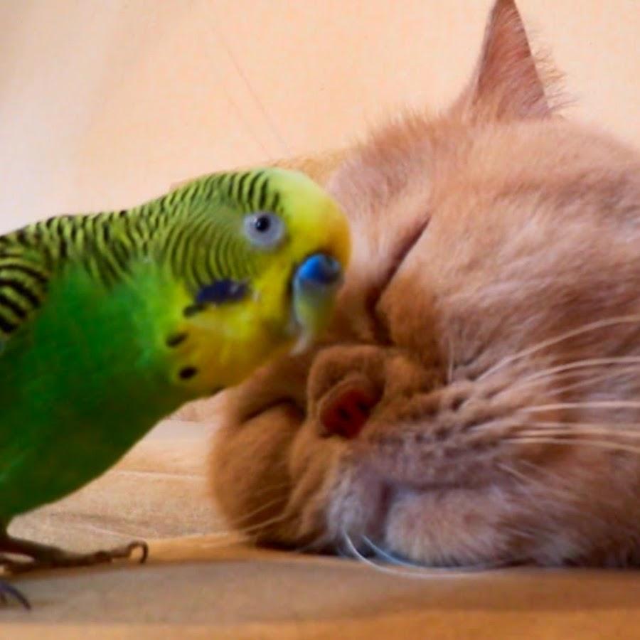 Картинки кошек и попугаев