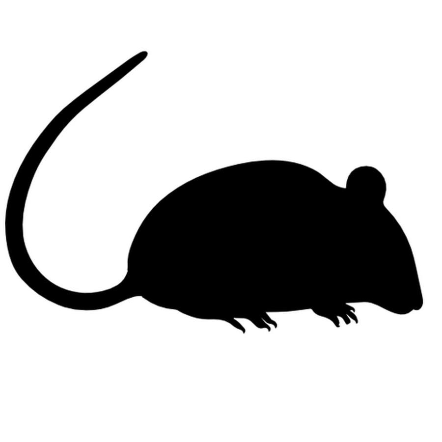 стык картинка силуэт крысы картинки для