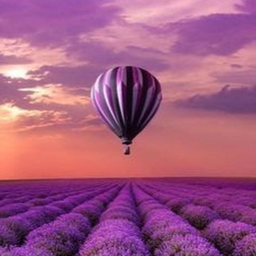 фото лаванда и воздушные шары уже второе поколение