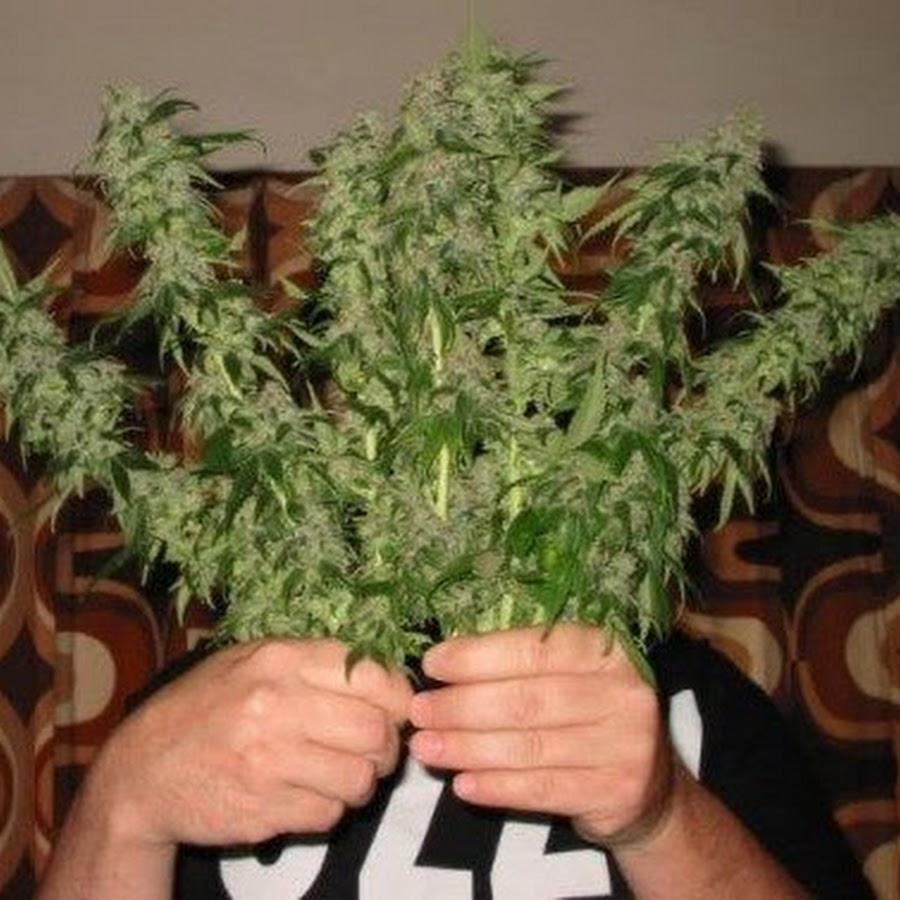 Что происходит из за марихуаны конопля как избавится от зависимости
