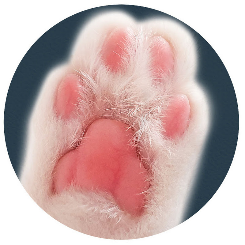 냥꼬리 19thfloorcats
