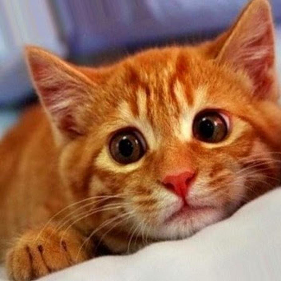 картинки котики просят давайте разберемся