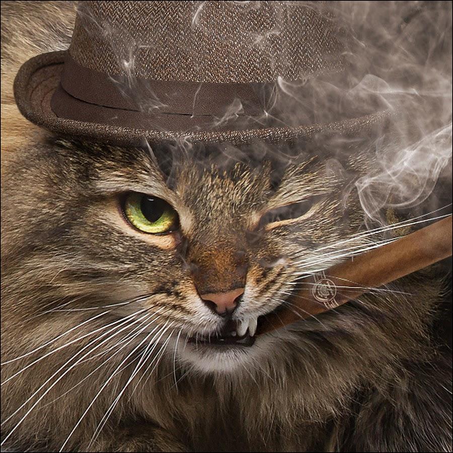 фото кота с сигаретой в зубах деревянный сруб уже