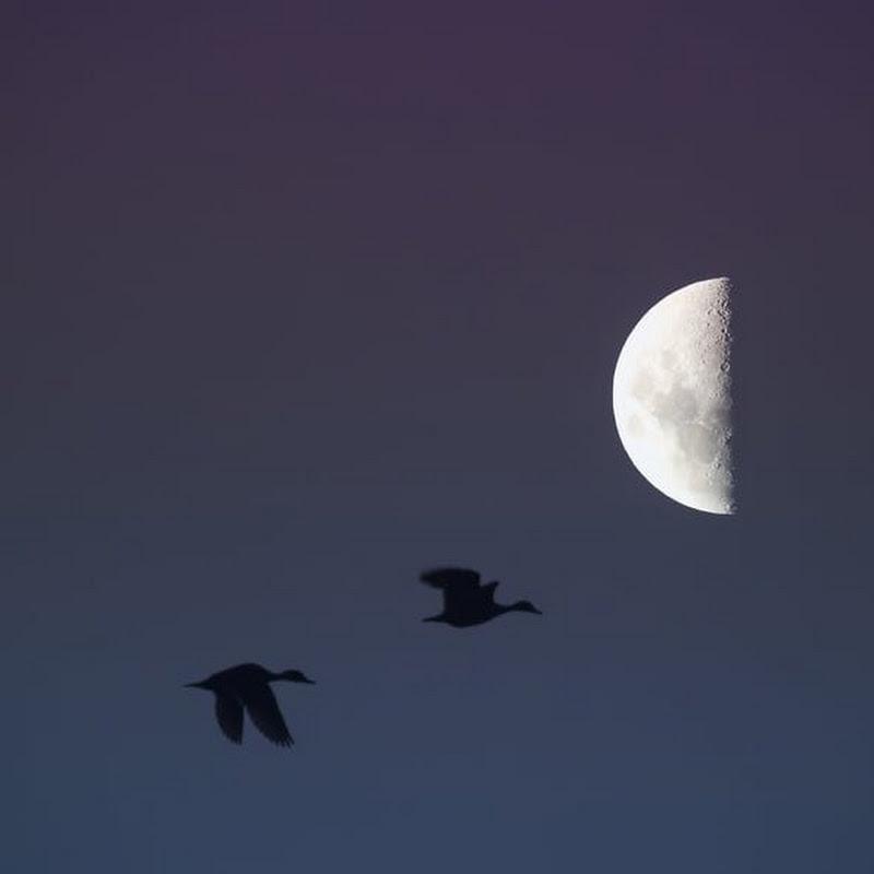 Moon Mist808