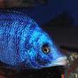 Very Fishe