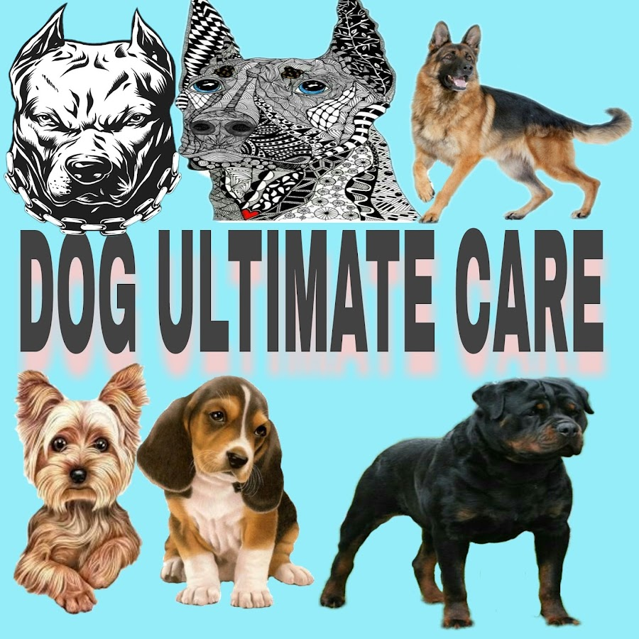 Dog Ultimate Care