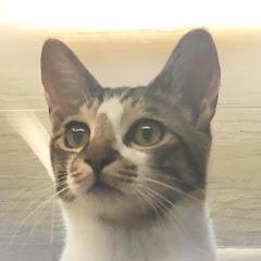 카레낫커리 CAARAE CAT