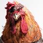 Ayam kruyuk!!
