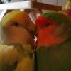 True Love Aviary