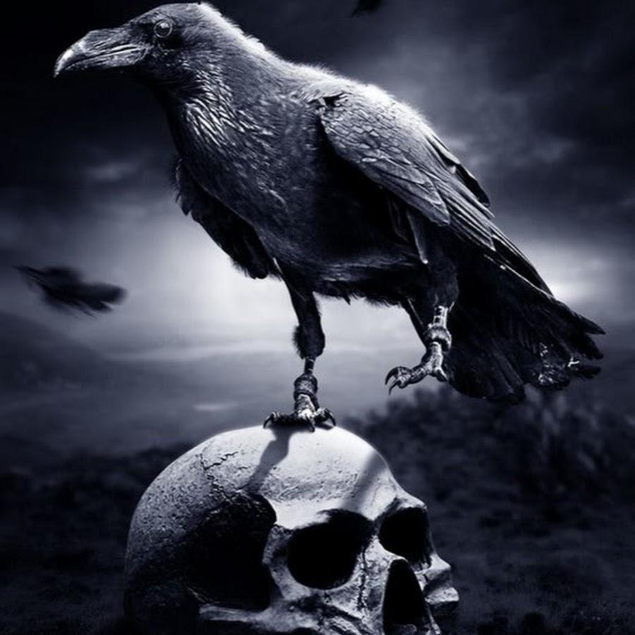 фото ворона на черепе они такие, какими