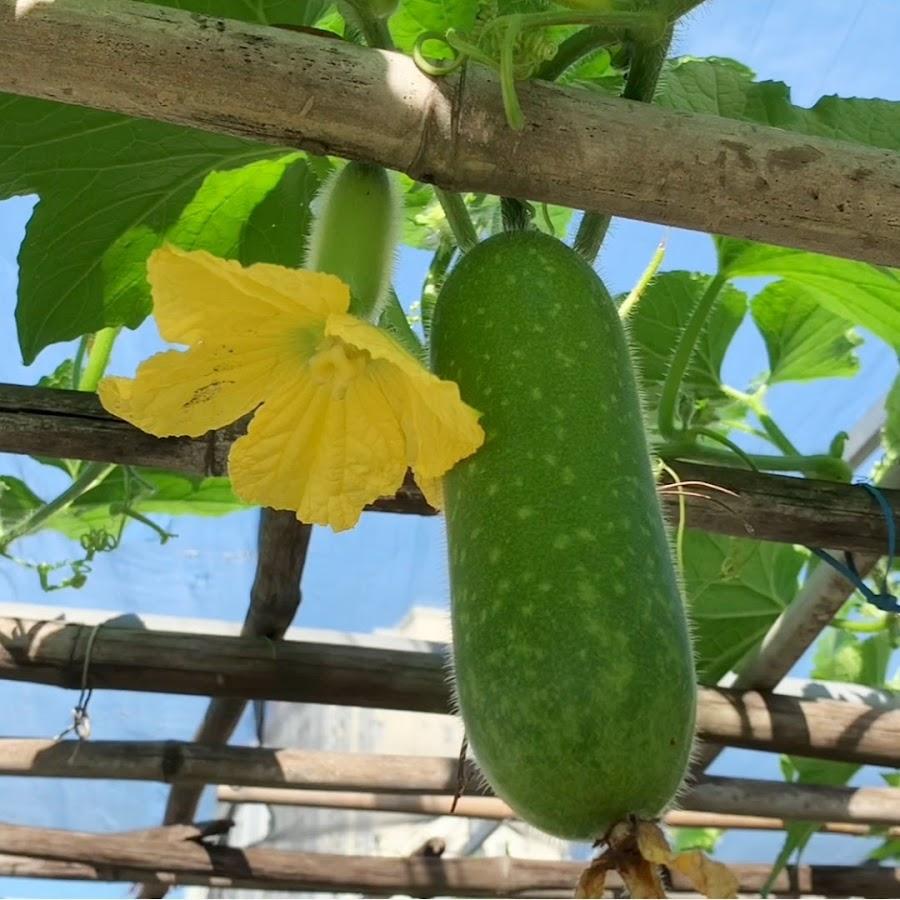 D-Gaming