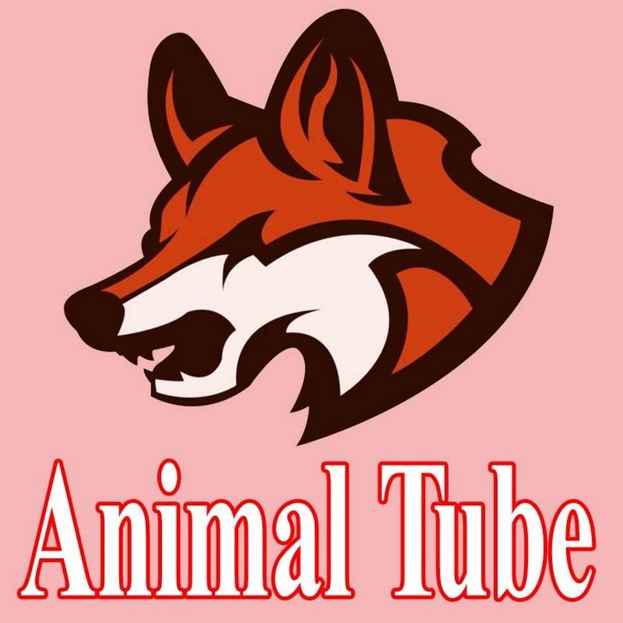 Animal Tube - YouTube