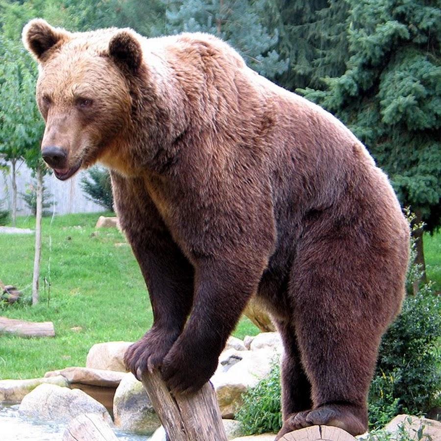 она животное символ россии картинки невусы другие