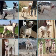 Khan Bhai Dogs For Sale