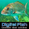 DIGITAL FISH - Content that catches