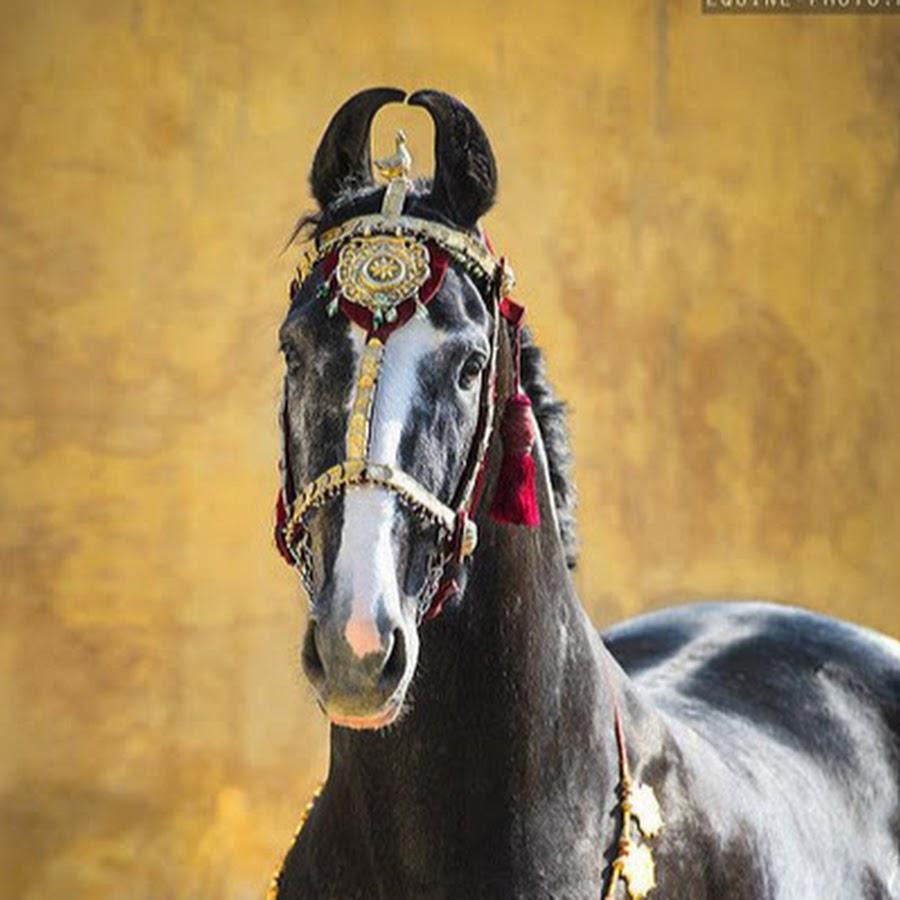 пафнутий, рассыпал марвари фото коней платье