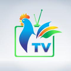 TV Gallo
