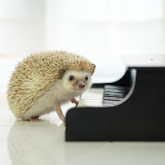 pino no piano