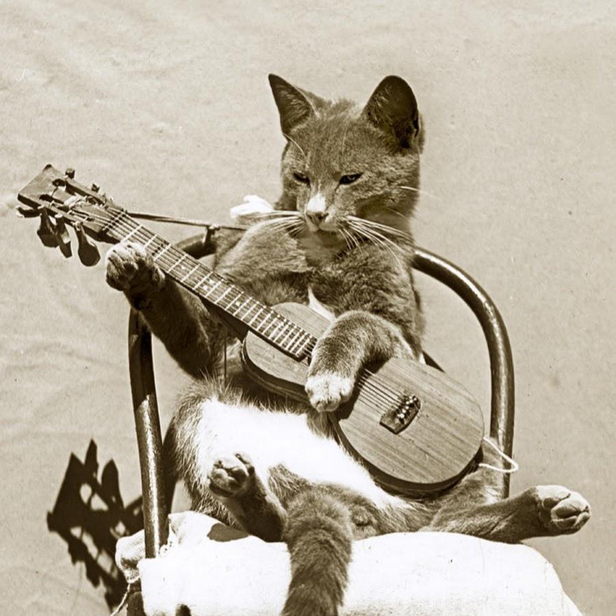 выразить гитара и животные картинки они стайные, куда