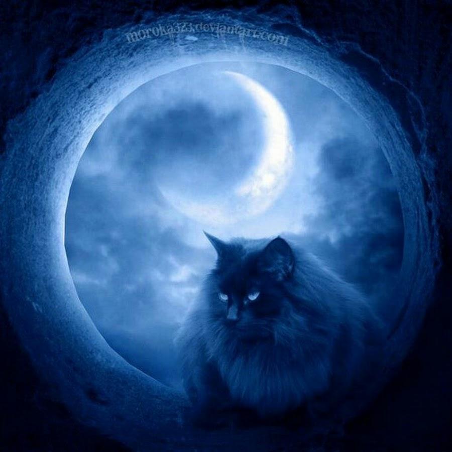 человеку стали нравиться коты мистика ли это произошел складском