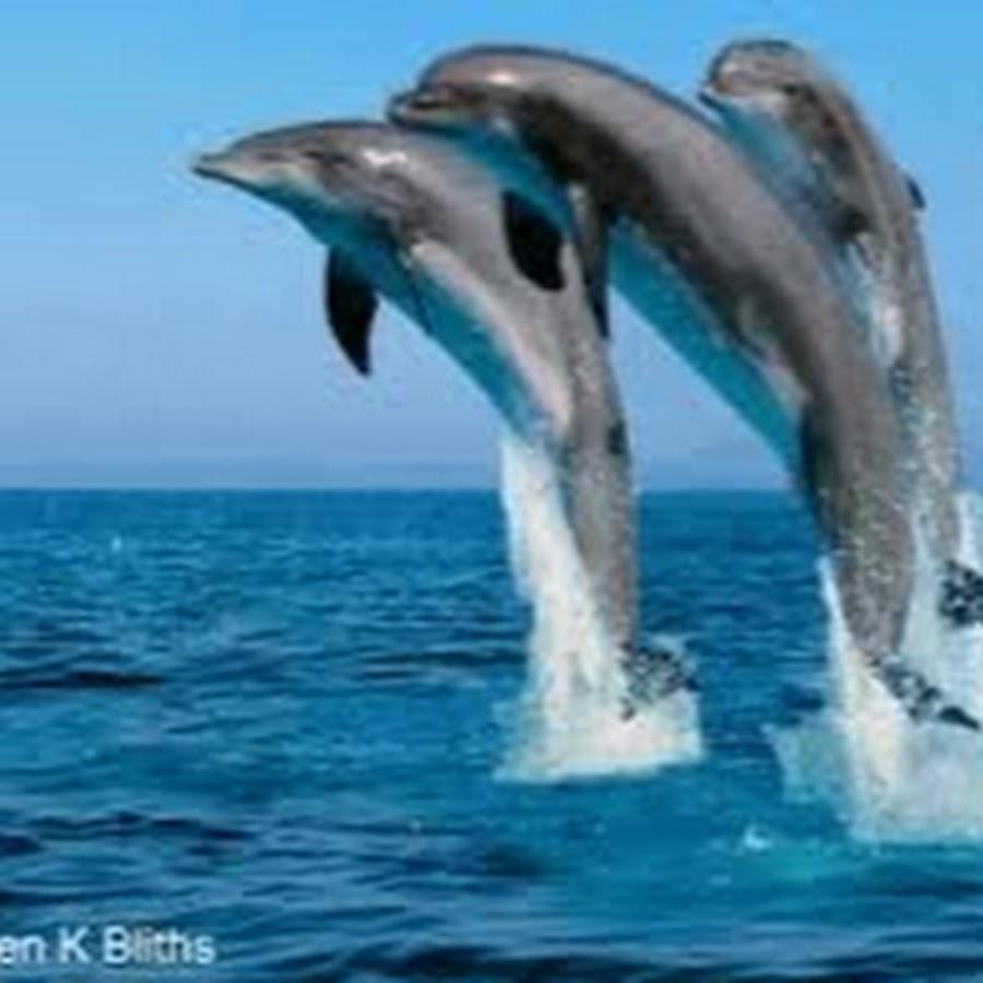 Картинки с анимацией дельфинов