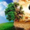 TreponatoR