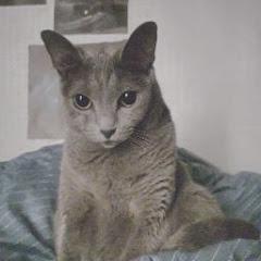 유튜버 StimGirl스팀걸의 유튜브 채널