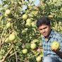 Apple Ber Nursery