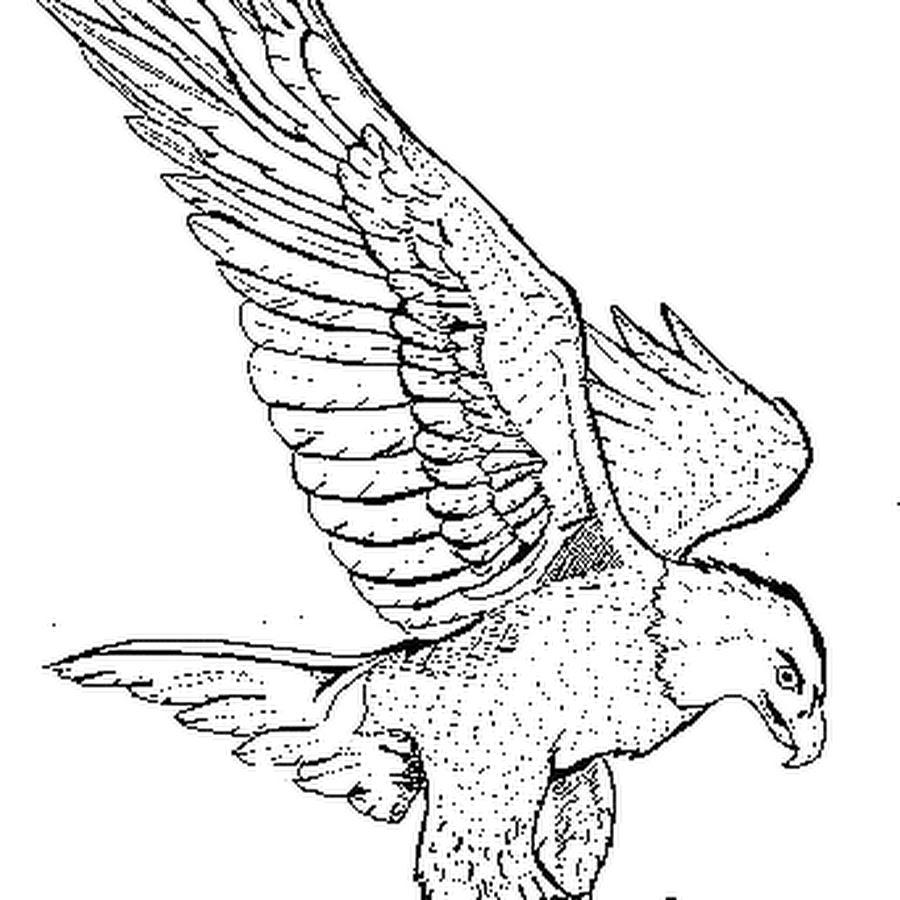 локомотивного раскраска орел в полете кактус выгнал бутоны