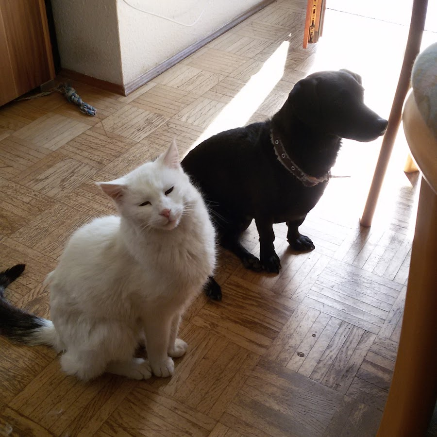 Hund Katze Maus Mediathek