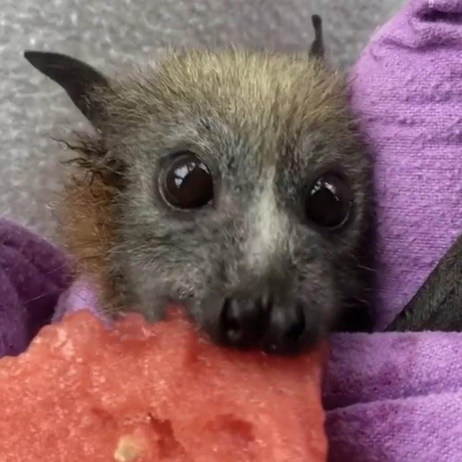 Kijux