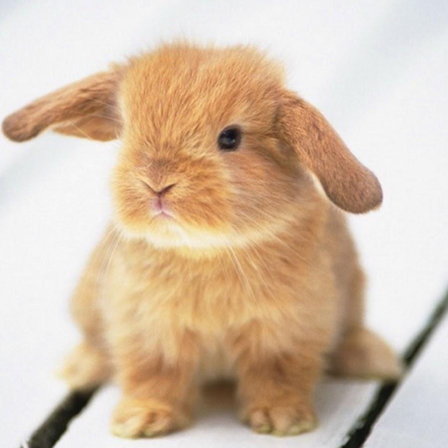 Bunny Häschen - YouTube