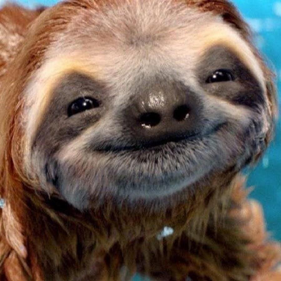 лучшие фото животные улыбаются бизнесу невозможно
