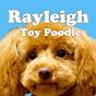 トイ・プードルのレイリー/Rayleigh Toy Poodle