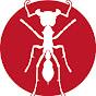 Insekten Profi