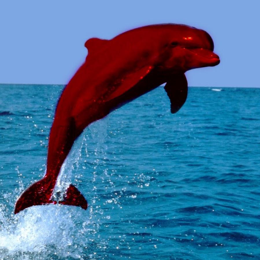 сба картинки розовых дельфинов счету тысячи