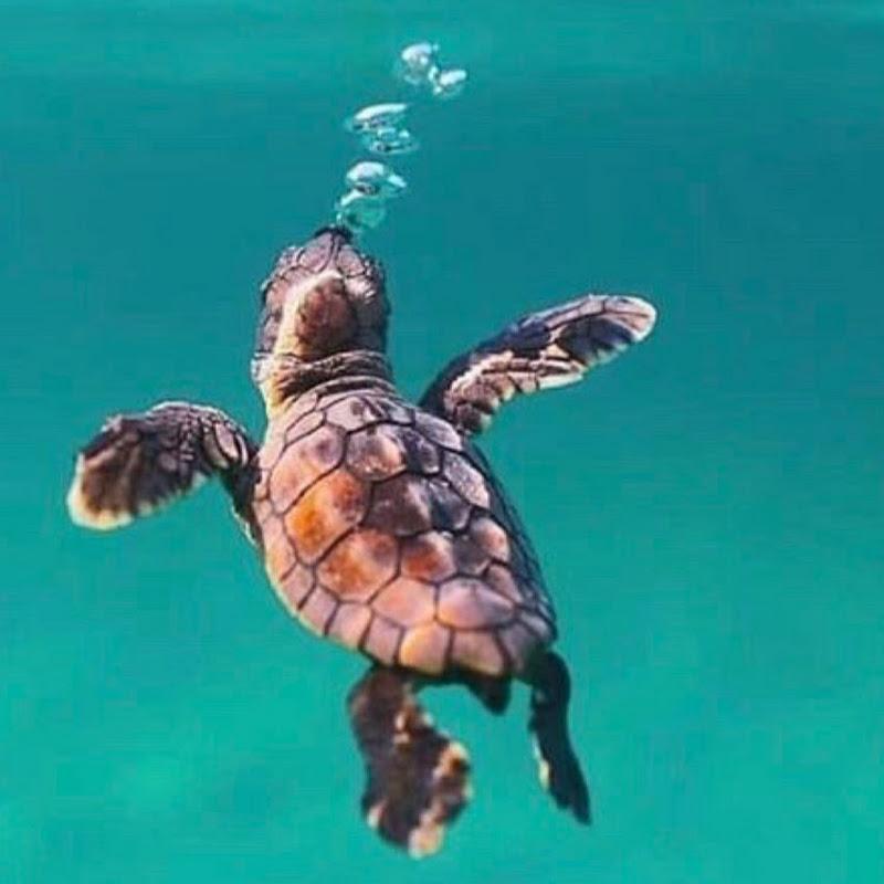 Lazy Turtle Maldives (lazy-turtle-maldives)