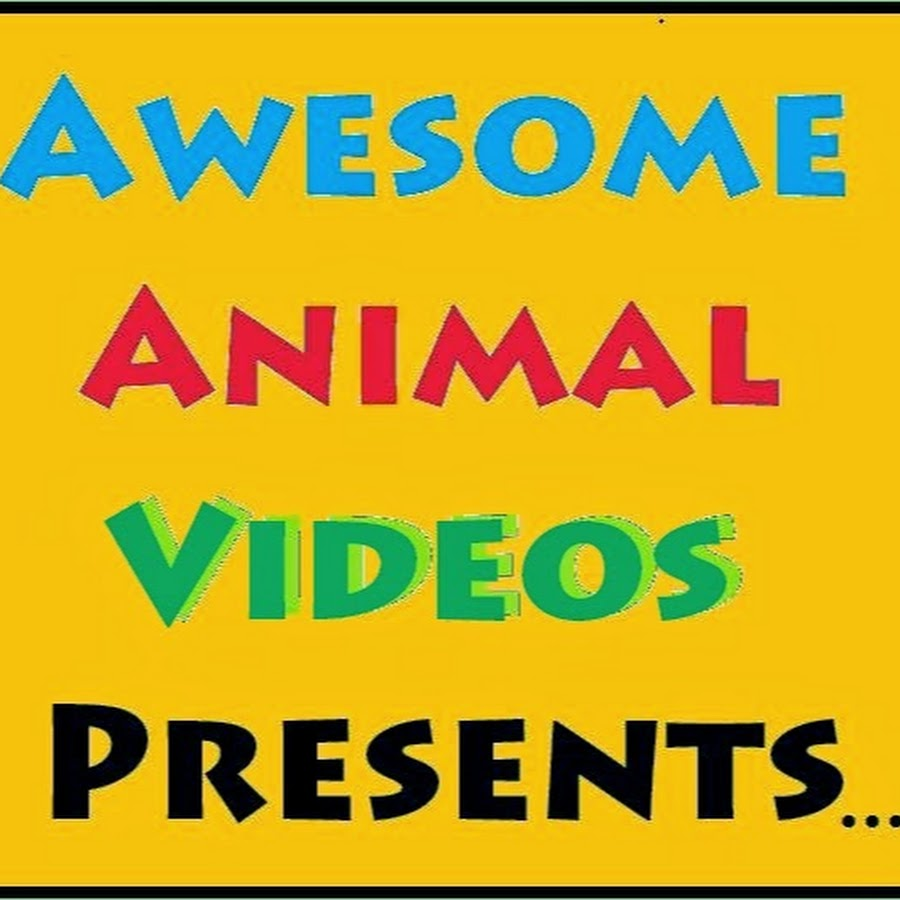 Funniest Animal Videos