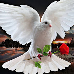 White dove of love